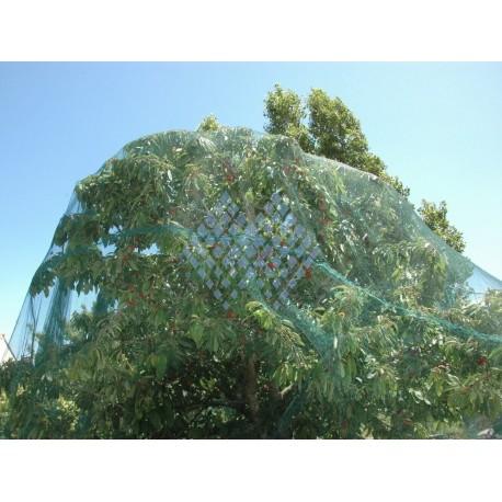 Filet de protection arbres fruitiers