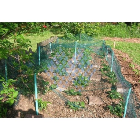 Filet de protection plantations