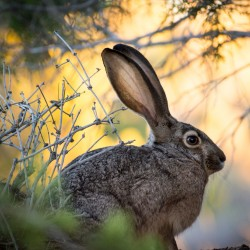 Filet de reprise lapins